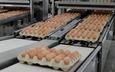Đại gia thép Hòa Phát dẫn đầu sản lượng trứng gà miền Bắc