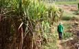 Giá đường giảm có thể gây cản trở việc cải cách ngành đường tại Anh