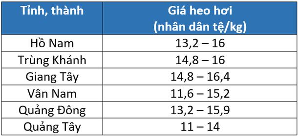 Giá heo hơi Trung Quốc hôm nay 28/3: Tăng trở lại sau chuỗi ngày giảm nhẹ - Ảnh 2.