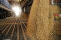 USDA: Nhập khẩu đậu nành của Trung Quốc dự kiến giảm lần đầu tiên kể từ 2014 trong năm 2019