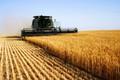 Thị trường hàng hóa 7/3: Tỏi Lý Sơn mất giá, Mỹ hạ dự báo thu nhập nông nghiệp 2019