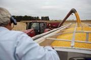 Dịch tả heo châu Phi bùng phát, Trung Quốc có mua hết 10 triệu tấn đậu nành Mỹ như cam kết?