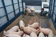 Giá thịt lợn giảm, sức mua chậm ở Quảng Ngãi