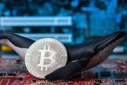 Giá bitcoin hôm nay (8/3) dao động quanh mốc 3.850 USD, 'cá mập' có bao nhiêu bitcoin ?