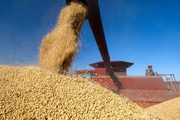 Căng thẳng thương mại với Trung Quốc khiến nông sản Mỹ 'điêu đứng'