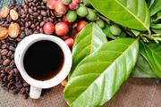 Giá cà phê hôm nay (20/2): Giảm 300 đồng/kg do ảnh hưởng bởi giá cà phê thế giới