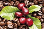 [Download] Báo cáo thị trường cà phê tháng 11: Xu hướng giảm giá cà phê quay trở lại