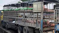 Bộ NN&PTNT: Cần đánh giá kĩ lưỡng rủi ro việc nhập khẩu heo sống