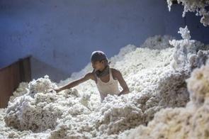 Ấn Độ nhìn thấy cơ hội xuất khẩu nông sản sang Trung Quốc từ cuộc chiến thương mại