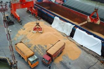 El Niño - cơ hội cho các nhà nhập khẩu đậu nành Trung Quốc